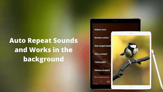 Bird Sounds – Nature Bird Calls & Ringtones 4