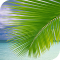 Palm on Beach Live Wallpaper APK