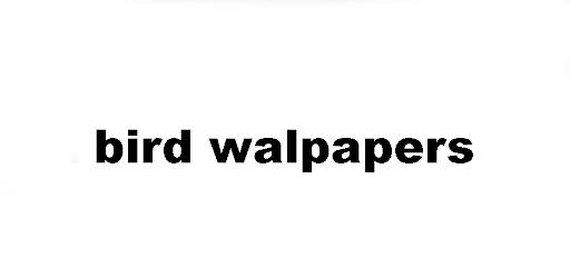 bird wallapapers APK 0