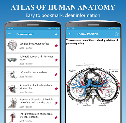 Human Anatomy Atlas - Anatomy Learning 2021  Screenshots 4