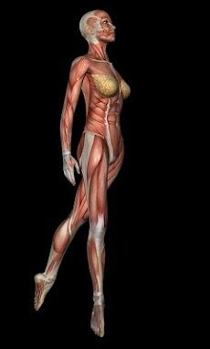 Anatomy for Artists: Balletのおすすめ画像3