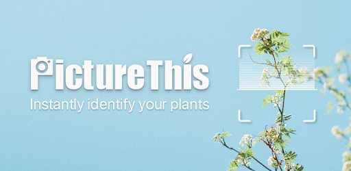 PictureThis: Identify Plant, Flower, Weed and More .APK Preview 0