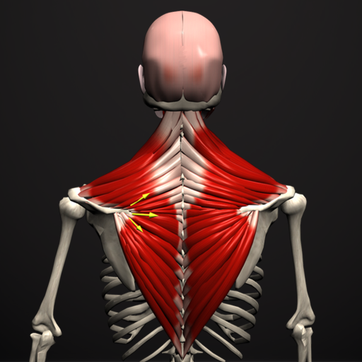 Baixar Anatomy by Muscle & Motion para Android