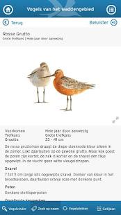 Wadvogels