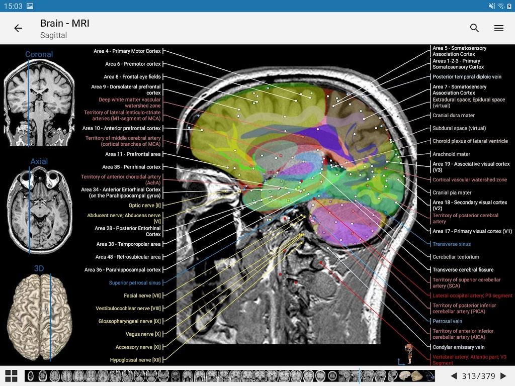 e-Anatomy  poster 10