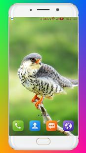Bird Wallpaper HD
