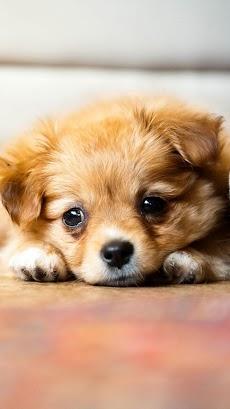 子犬 ライブ壁紙 – 可愛い子犬のおすすめ画像2