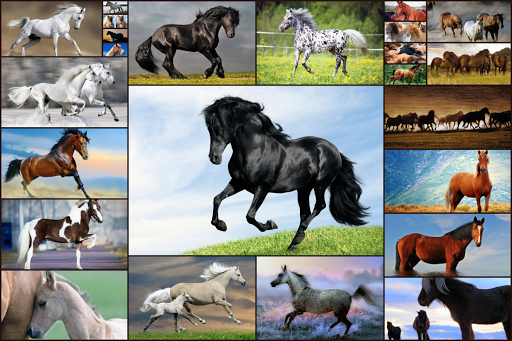 Horse Jigsaw Puzzles Game - For Kids & Adults ud83dudc34 android2mod screenshots 1