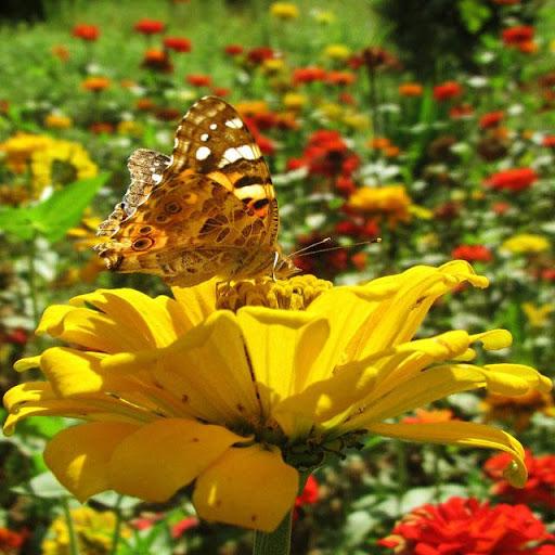 Butterflies Jigsaw Puzzles screenshots 10