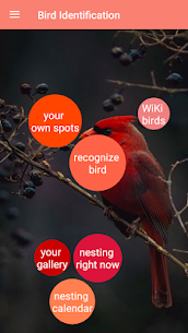 Bird Identification 1