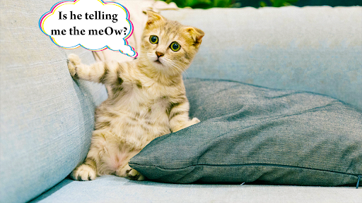 Cat translator. Cat sounds. Meow joke 3.6 screenshots 4