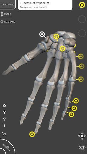 Skeleton   3D Anatomy 2.5.3 Screenshots 3