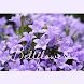 美しい壁紙アイコン キキョウの花 無料