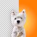 Dog Photo Editor - Background Changer and Eraser - 写真アプリ