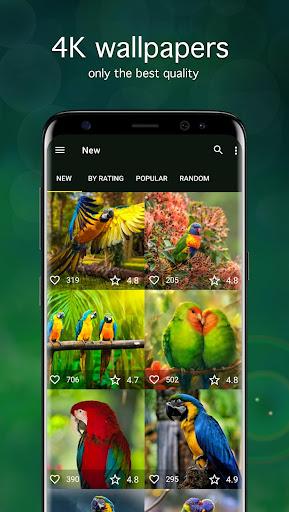 Parrot Wallpapers 4K 5.2.0 screenshots 1