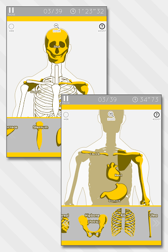 Enjoy Learning Anatomy puzzle 3.2.3 screenshots 2