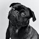 wallpapers bulldog 2021 - Androidアプリ
