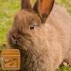 rabbit wallpaper - rabbit moving wallpaper APK