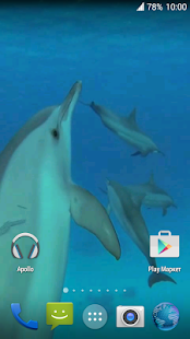 Dolphins. Live Video Wallpaper