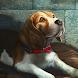 レスキュールーシー 2 - Rescue Lucy 2 - Androidアプリ