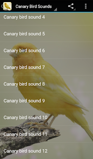 Canary Bird Sounds Screenshot