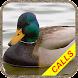 アヒル狩猟の呼びかけ:水鳥狩猟の音