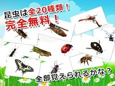 昆虫カード 子供向け図鑑 教育・知育・英語のおすすめ画像2