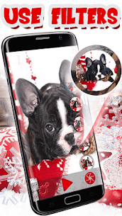 Download Christmas Animals Live Wallpaper in Your PC (Windows and Mac) 2