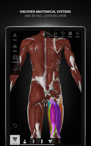 Anatomyka - 3D Human Anatomy Atlas 2.1.5 Screenshots 14