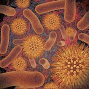 Infectious Disease Compendium  Icon