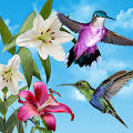 Birds Live Wallpaper Free APK