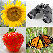 Guess Pictures and Words: Photo-Quiz with 5 Topics