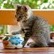 ジグソーにゃんこ - かわいい猫のジグソーパズル - Androidアプリ