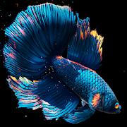 Betta Fish Live Wallpaper FREE