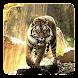 タイガースは、壁紙を生きる