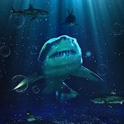 COGUL HD/4K Wallpaper - Shark In The Sea