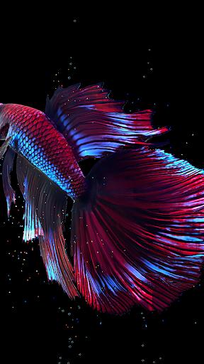 Betta Fish Live Wallpaper FREE 1.4 Screenshots 5