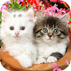 Cute Baby Animals Pictures Apk