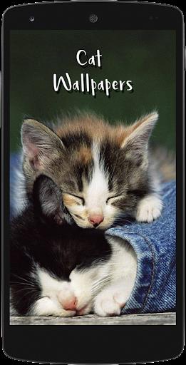 Cute Cat HD Wallpapers screenshots 1