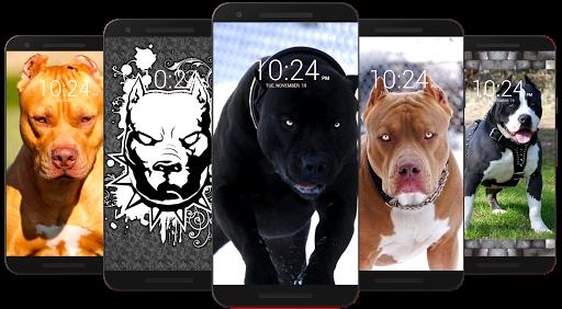Pitbull Wallpaper HD  screenshots 1
