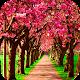 Spring Wallpaper HD Download on Windows