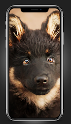 puppies wallpapers FHD 4K 2021 .APK Preview 2