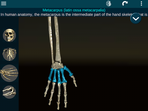 Osseous System in 3D (Anatomy) 2.0.3 Screenshots 20