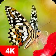 Butterfly Wallpapers 4K