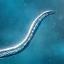 Bionix icon