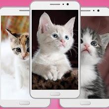 Cute Kitten Wallpaper Apk - Animal Backgrounds App Download on Windows