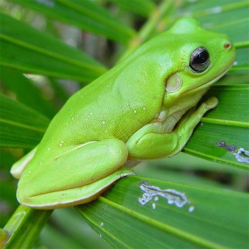 Frogs Jigsaw Puzzles  screenshots 4