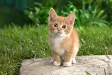 猫のジグソーパズルのおすすめ画像1