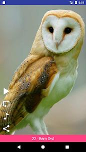 Bird Sounds 5