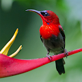 Beautiful Birds Live Wallpaper APK